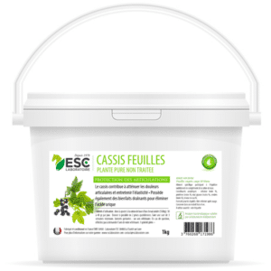 Cassis – Articulations cheval – Plante pure