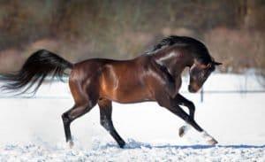 Les muscles du cheval – Savoir comment développer la masse musculaire