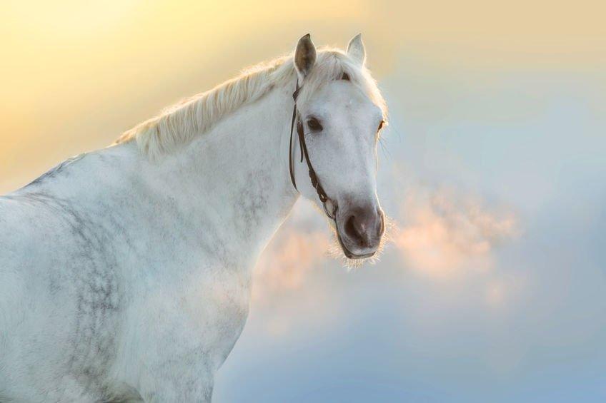 La respiration du cheval – Aider son cheval à mieux respirer