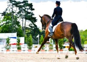 La locomotion du cheval – Comprendre l'appareil ostéo-articulaire équin